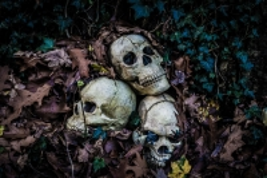 web-halloween-065-2014_10_31_6d_1207-032