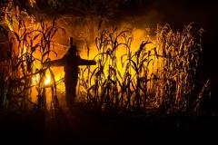 web-halloween-378-2014_10_31_1d_5301-020