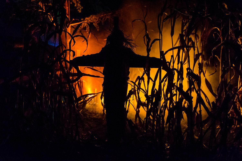 web-halloween-222-2014_10_31_1d_5014-030